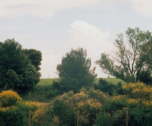 35mm, forest, and landscape image