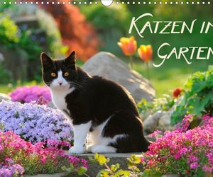 adorable, cat, and garden image