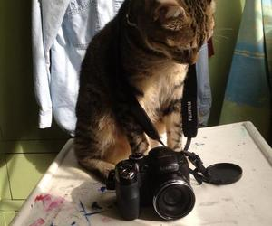 cat, kitten, and photography image
