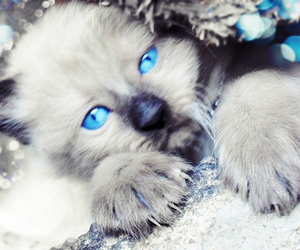 *-*, blue eyes, and cat image