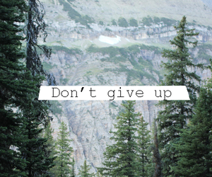 don't give up, forest, and Lyrics image