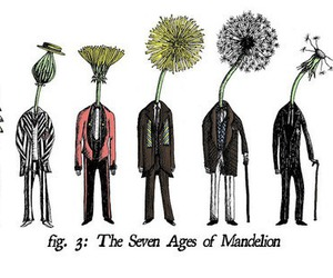 dandelion, life, and age image