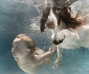dog, water, and swimming image