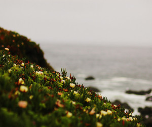 cliff, flowers, and grass image