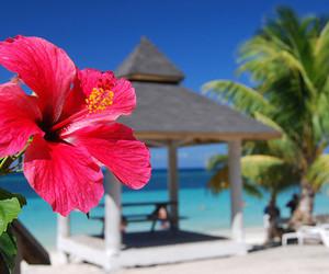 Aloha, beach, and Dream image