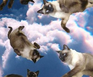 cat, sky, and clouds image