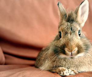 bunny, pet, and rabbit image