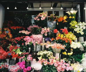 flowers, rose, and shop image