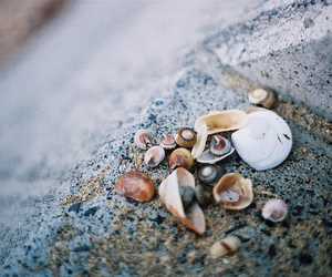 photography and shells image