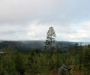 forest, nature, and sweden image
