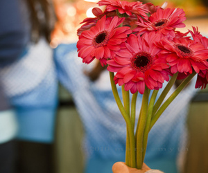 photography, flowers, and gerbera image