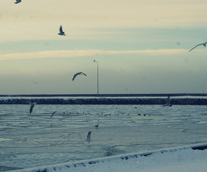 birds, ice, and ocean image