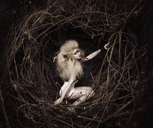ANTM, editorial, and allison harvard image