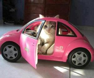 cat, pink, and car image