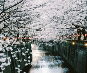 flowers, photography, and japan image