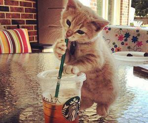 cat, cute, and starbucks image