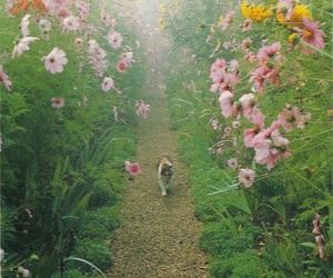 cat, garden, and flowers image