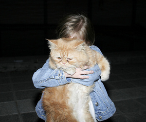 cat and hug image