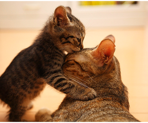 cat, cute, and kiss image