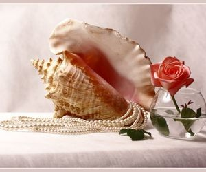 art, pearls, and rose image
