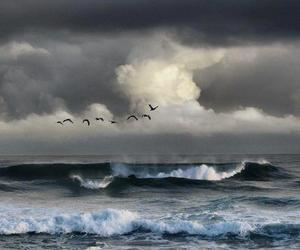beach, birds, and landscapes image
