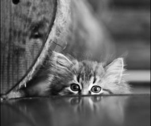gray cat, small cat, and photography image