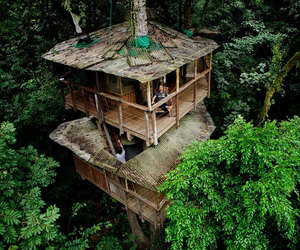 nature, treehouse, and tree image