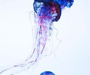 jellyfish and sea image