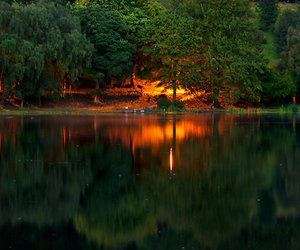 fire, forest, and light image