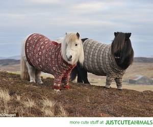 ponies, cute, and scotland image
