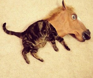 cat, funny, and horse image