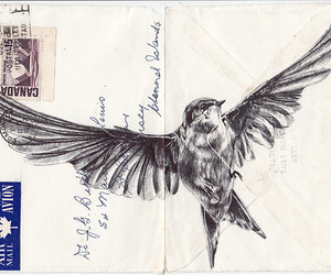 bird, drawing, and fly image