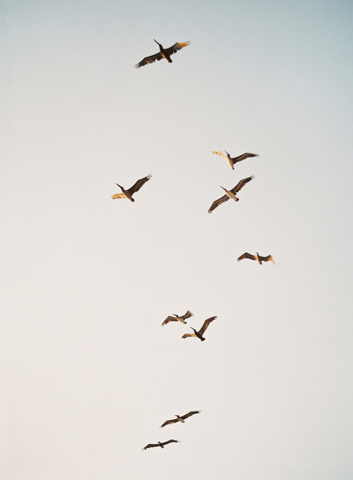 birds, hipster, and sky image