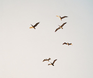 birds, sky, and beige image