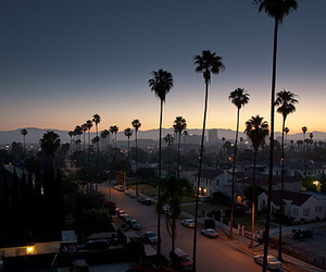 city, sunset, and palm trees image
