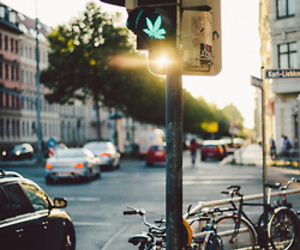 weed, green, and city image