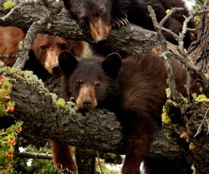bear, animal, and tree image