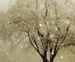 snow, Polar Bear, and winter image