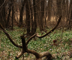 forest and spring image