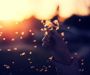 flowers, photography, and sunset image