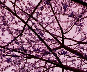 beautiful, tree, and flower image