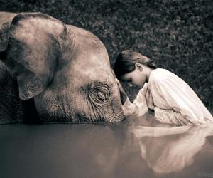 adventure, elephant, and inspire image