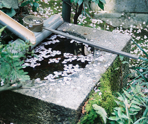 flowers, japan, and photograph image