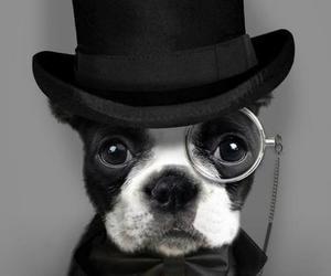 dog, black and white, and animal image