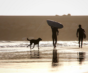 dog, surf, and sunset. image