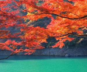 japan, boat, and autumn image