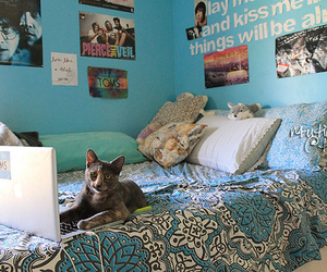cat, tumblr, and bedroom image