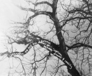 black and white, reality, and tree image