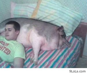 pig and boy image