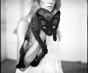 black, cat, and beautiful image